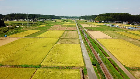 aerial shot of rice field Footage