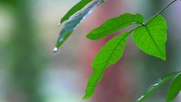 green vegetation on a rainy day Footage