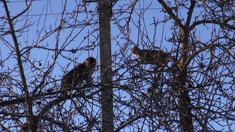 two cats on garden apple treetop Footage