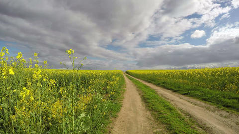 rapeseed field and rural road in spring. Farmland landscape, time lapse Footage