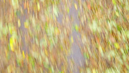 UNSTABLE QUICK MOTION Dead fallen colorful leaves laying on wet road after rain. Image