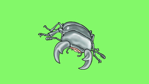 Stag beetle3 Animación