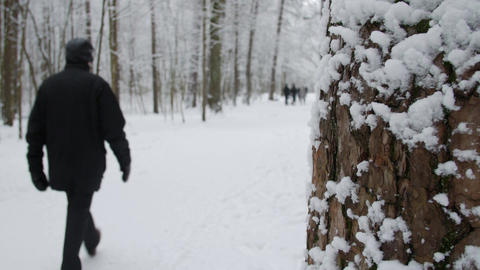 Winter park with snow covered trees, a man walking in the park Footage