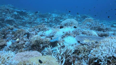 A coral reef dies Image