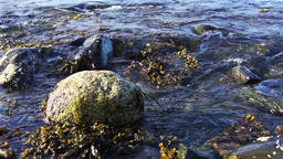Macro closeup of rocky beach shore in Bar Harbor, Maine by Acadia National Park Footage