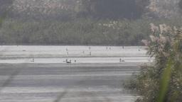 Cormorants in Jordan River Footage