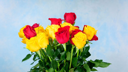 Rotating yellow and red rose bunch on blue Footage