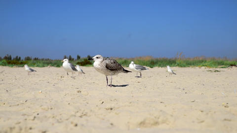 A Flock Of Sea Gulls 1