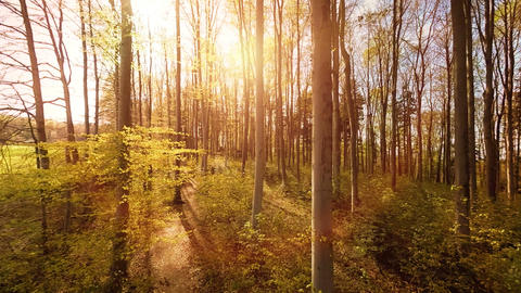 Aerial view trees forest silhouette springtime sun flare light nature plants Footage
