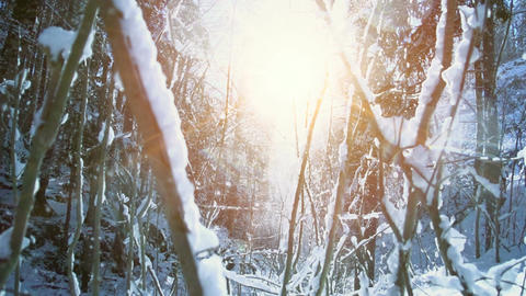 Beautiful winter snow forest trees woods nature snow fall slow motion Footage