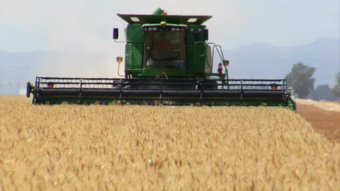 Combine harvests wheat in field Footage