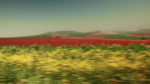 Driving past strip of greenery and red field Footage