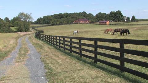 Hd farms countryside farm horses Footage