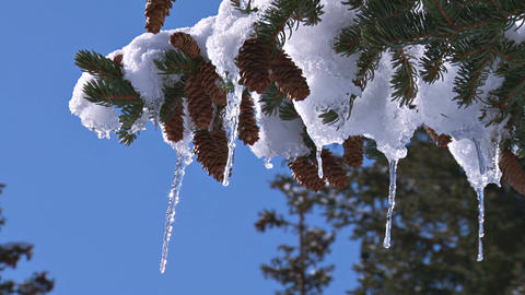 Icicles weighing down branch Footage