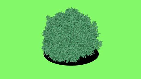 Creeping garden plant Animation