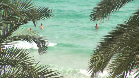 People swimming in ocean with palm leaves Footage