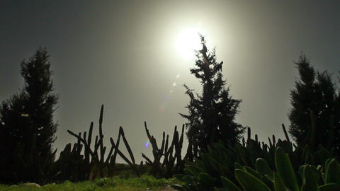 Pine trees silhouette against sun in sky Footage