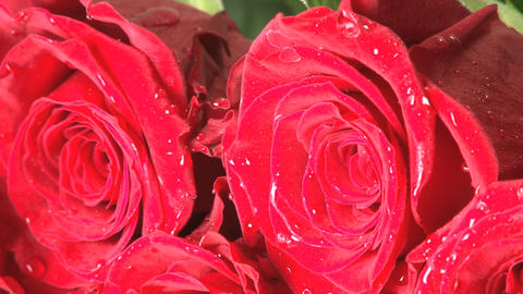 Rotating wet red roses Footage