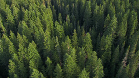 Scenic forestry aerial Footage