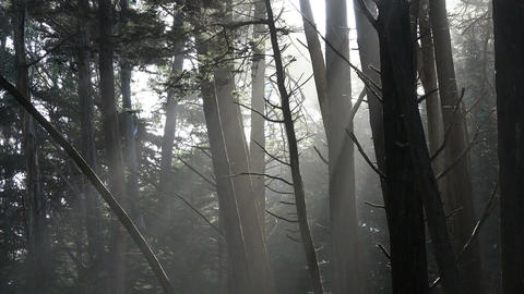 Static wide shot of sunbeams in fort ross woods california Stock Video Footage