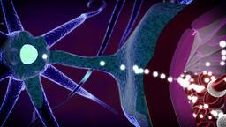 Drugs cross blood brain barrier Animation