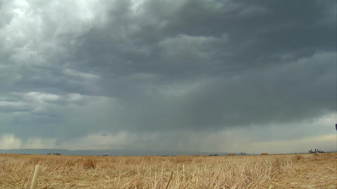 Stormy skies and lightning over wheat field Live Action