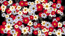 Rotating flowers with dark background Animation