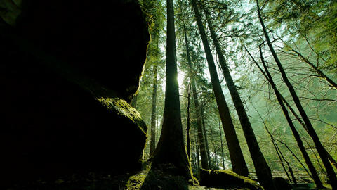 Trees in forest woods mystical forest green nature background Footage