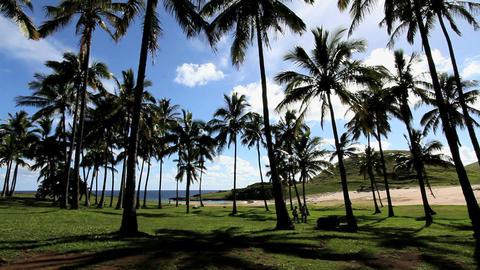 Tropical palm tree beach oneaster island Footage