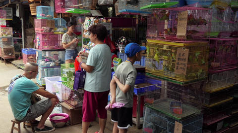 Exotic Birds Sold As Pets In Chinese Market China Asia Footage