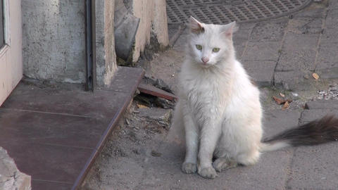 white dirty domestic cat on street Live Action