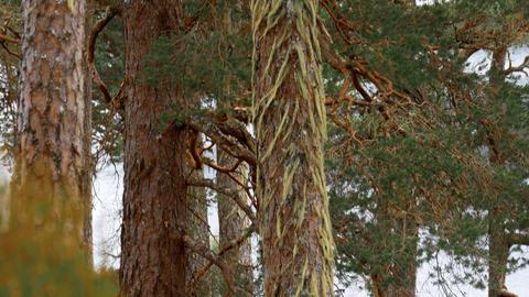Glen Affric Forest, Scotland Footage
