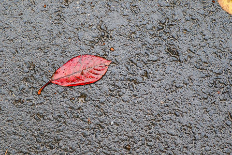 Autumn rain, branches and leaves Photo