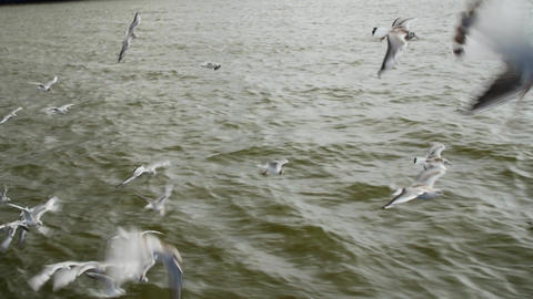Many gulls flying over the water. Flock closeup Filmmaterial
