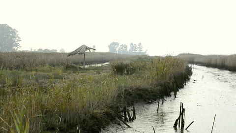 Reed along the pond Stock Video Footage
