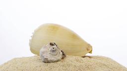 Rotating shells Stock Video Footage