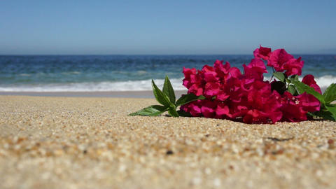 Tropical Beach Flowers Stock Video Footage