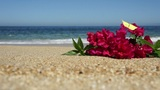 Tropical Beach Flowers Footage