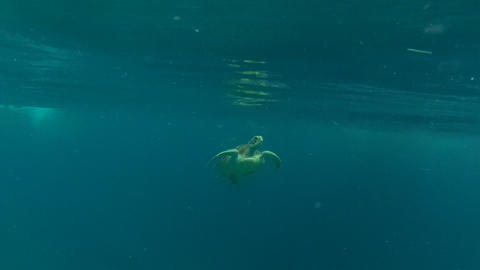 Sea turtle Stock Video Footage