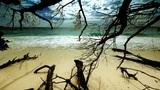 Wild beach Footage
