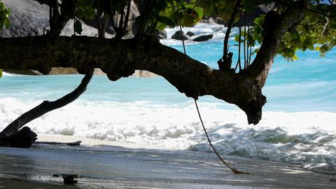 Wild beach Stock Video Footage