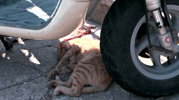 Greece the Aegean Sea Kos 021 striped cat enjoys lunch hour under scooter Footage