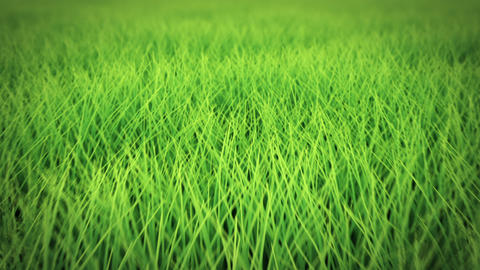 Low flight over grass, DOF, seamless loop Animation