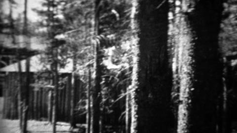1934: Ford model A car driving past log cabin thru pine tree forest Footage