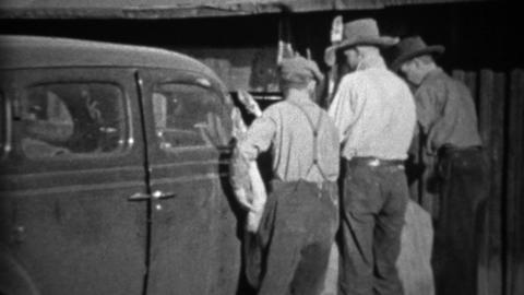 1935: Men tie dead hunted deer to front of Plymouth car for transport Footage