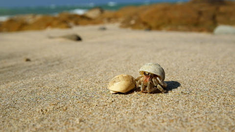 Hermit crab comes out of the shell tropical ocean sandy beach Footage