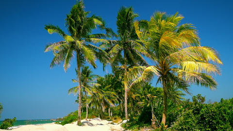 Amazing tropical beach landscape with palm trees, white sand and turquoise ocean Footage