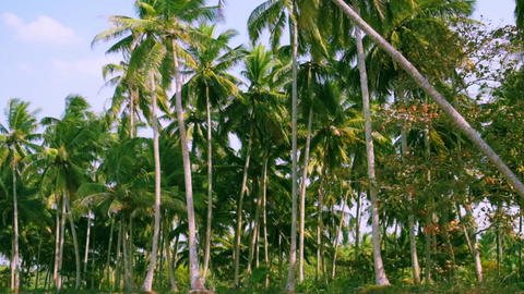Palm trees in tropical beach at sunny day panning video Footage