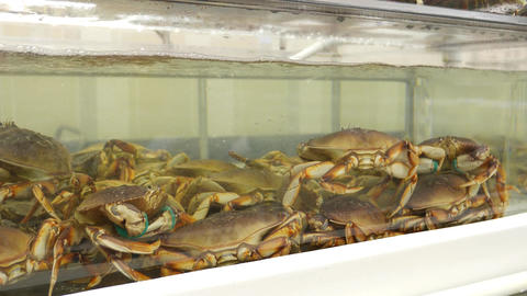 Motion of live crabs in the tank at superstore Footage