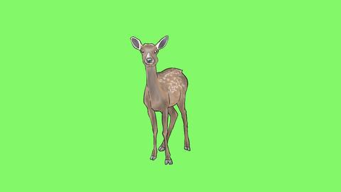 Deer Set 0
